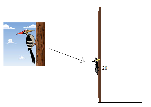 woodpecker height question